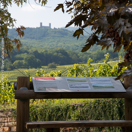 Wine learning path in Mittelbergheim on the Alsace wine route. Castle of Andlau in the background.