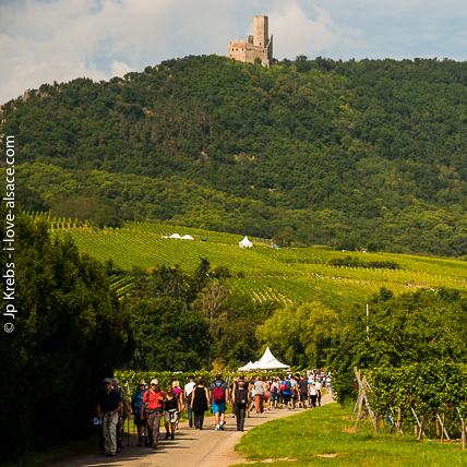 Hiking and picnicking in the vineyards of Scherwiller, a neighbour village to La Vancelle